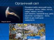 Органічний світ Лишайники Поширені риби: морський окунь, оселедець, тріска, с...