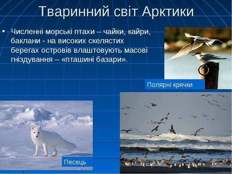 Тваринний світ Арктики Численні морські птахи – чайки, кайри, баклани - на ви...